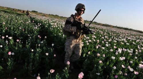 marine opio1