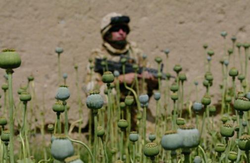 marine opio3
